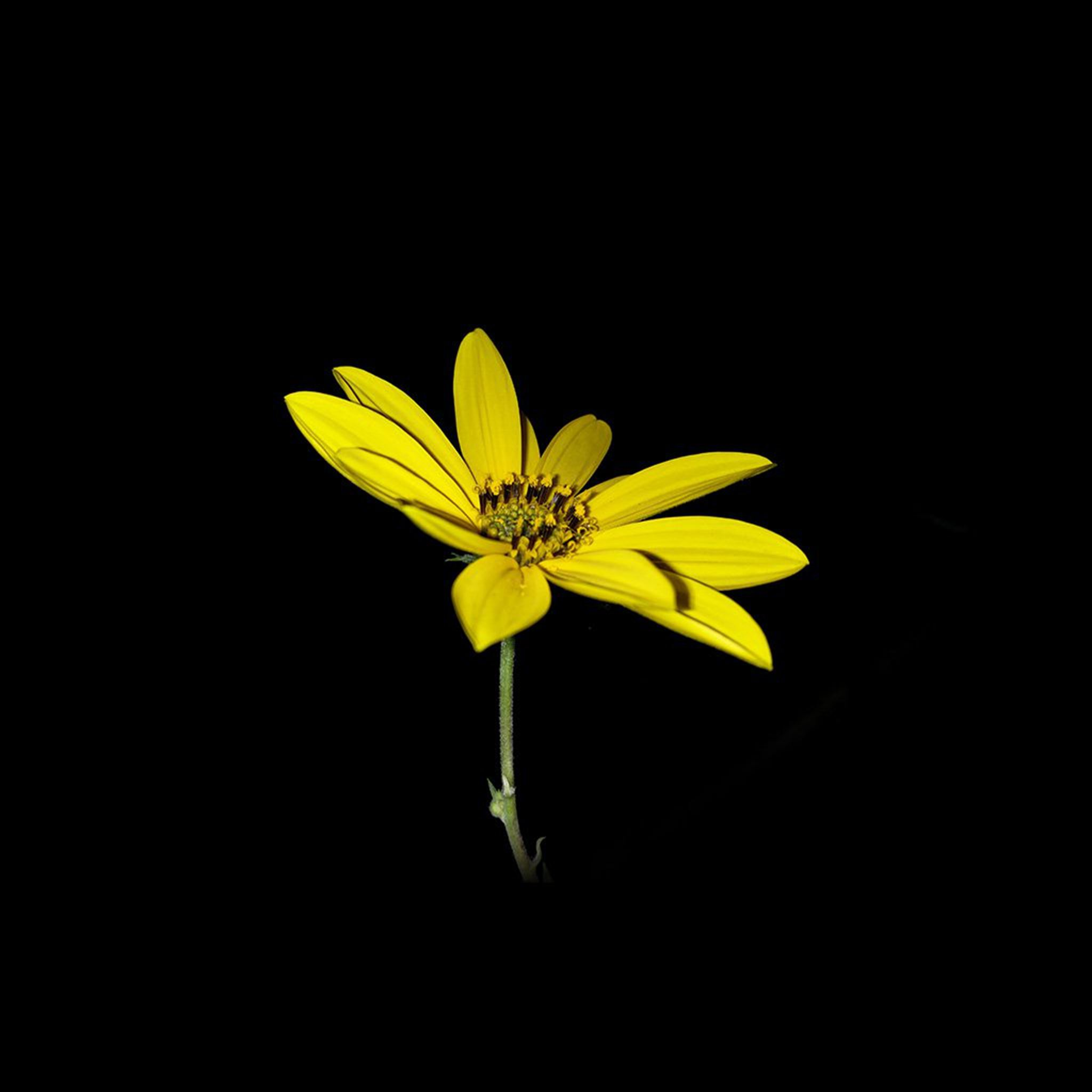 Flower Yellow Nature Art Dark Minimal Simple iPad Air wallpaper