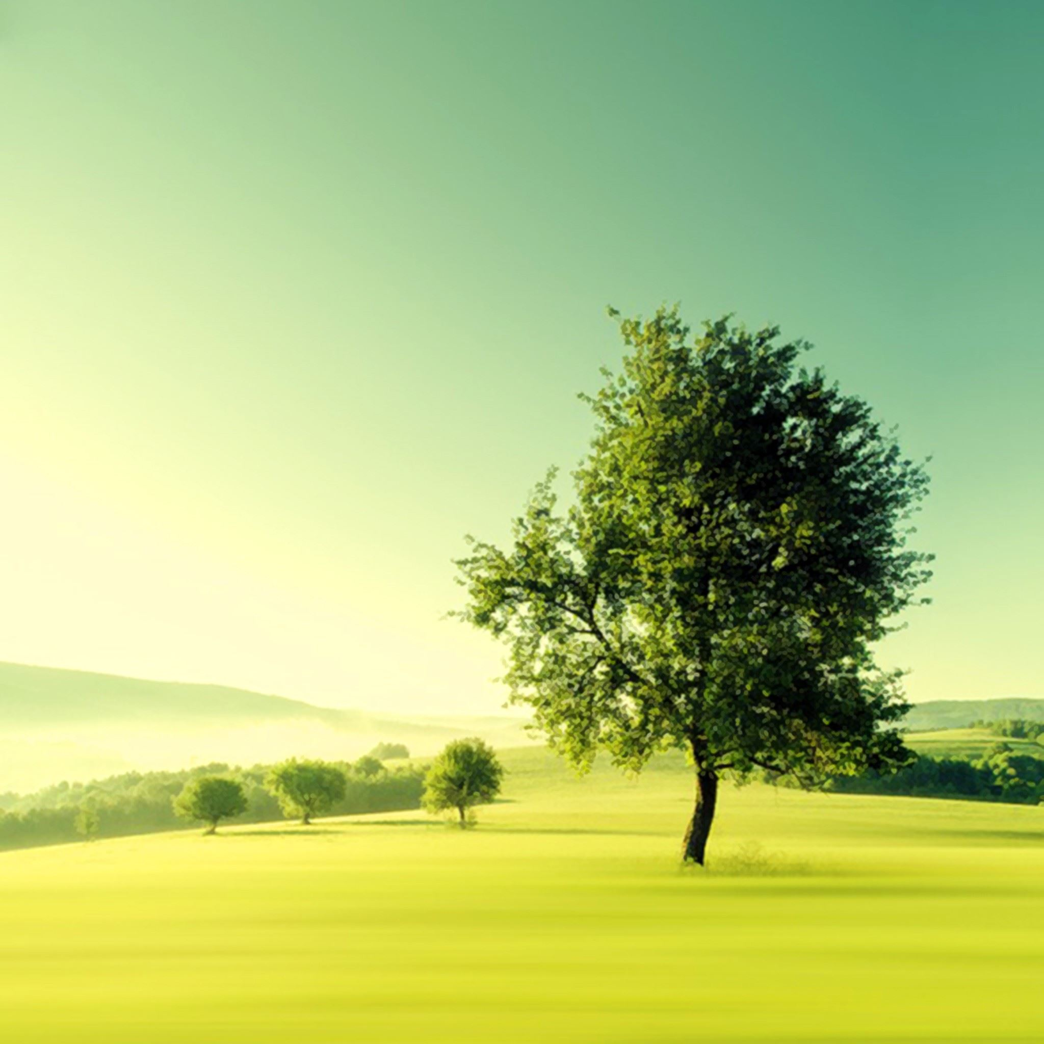 Nature Lonely Tree Plain Field iPad Air wallpaper
