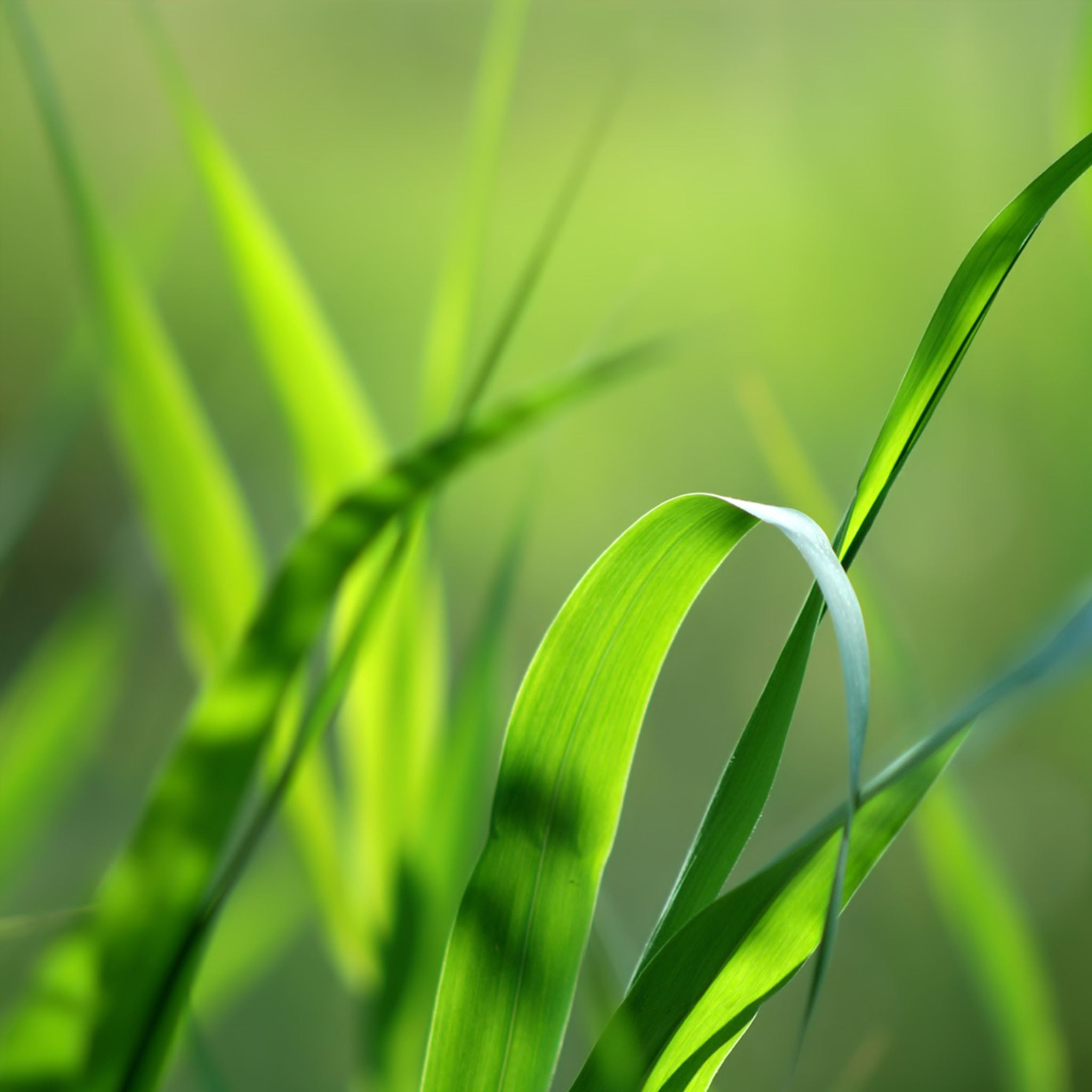 Nature Blades Of Grass Ipad Air Wallpapers Free Download