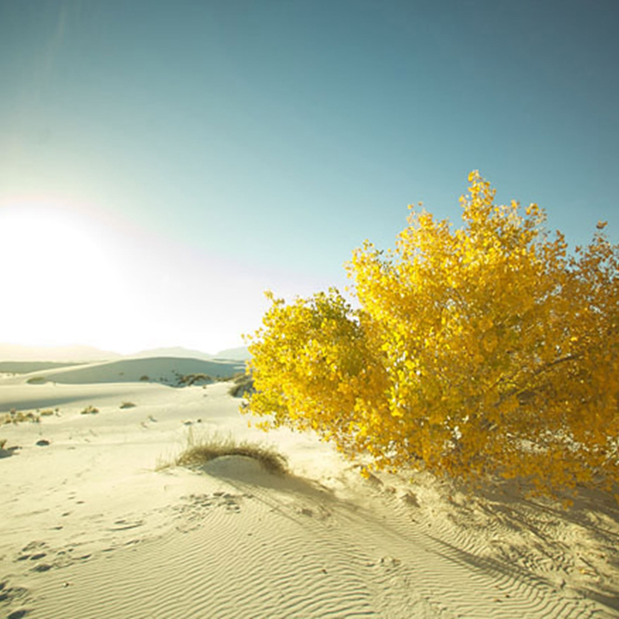 Wide Golden Tree Desert iPad Air wallpaper
