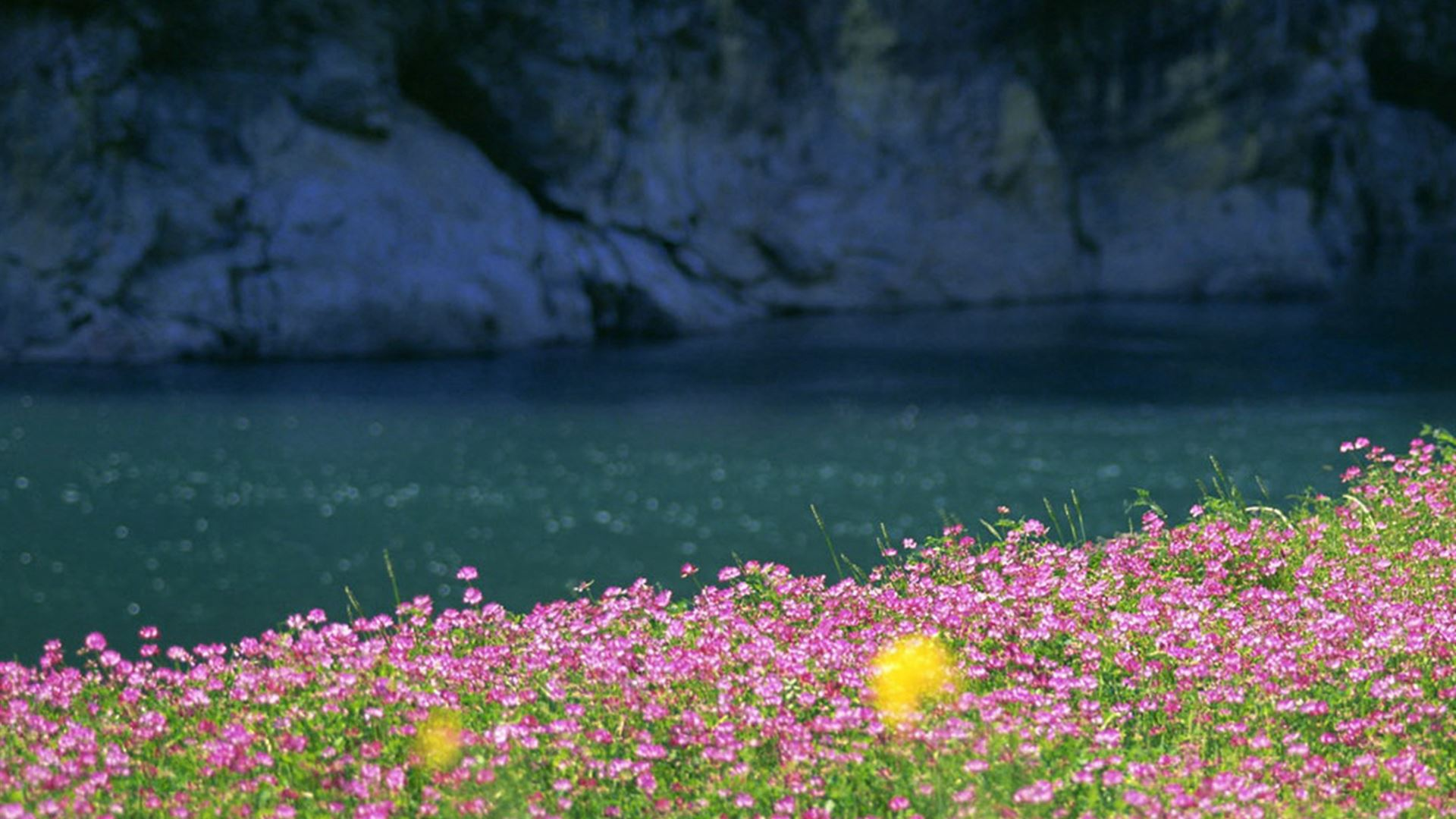 ... Nature Mountain Rock Wildflowers Field iPad Air wallpaper.