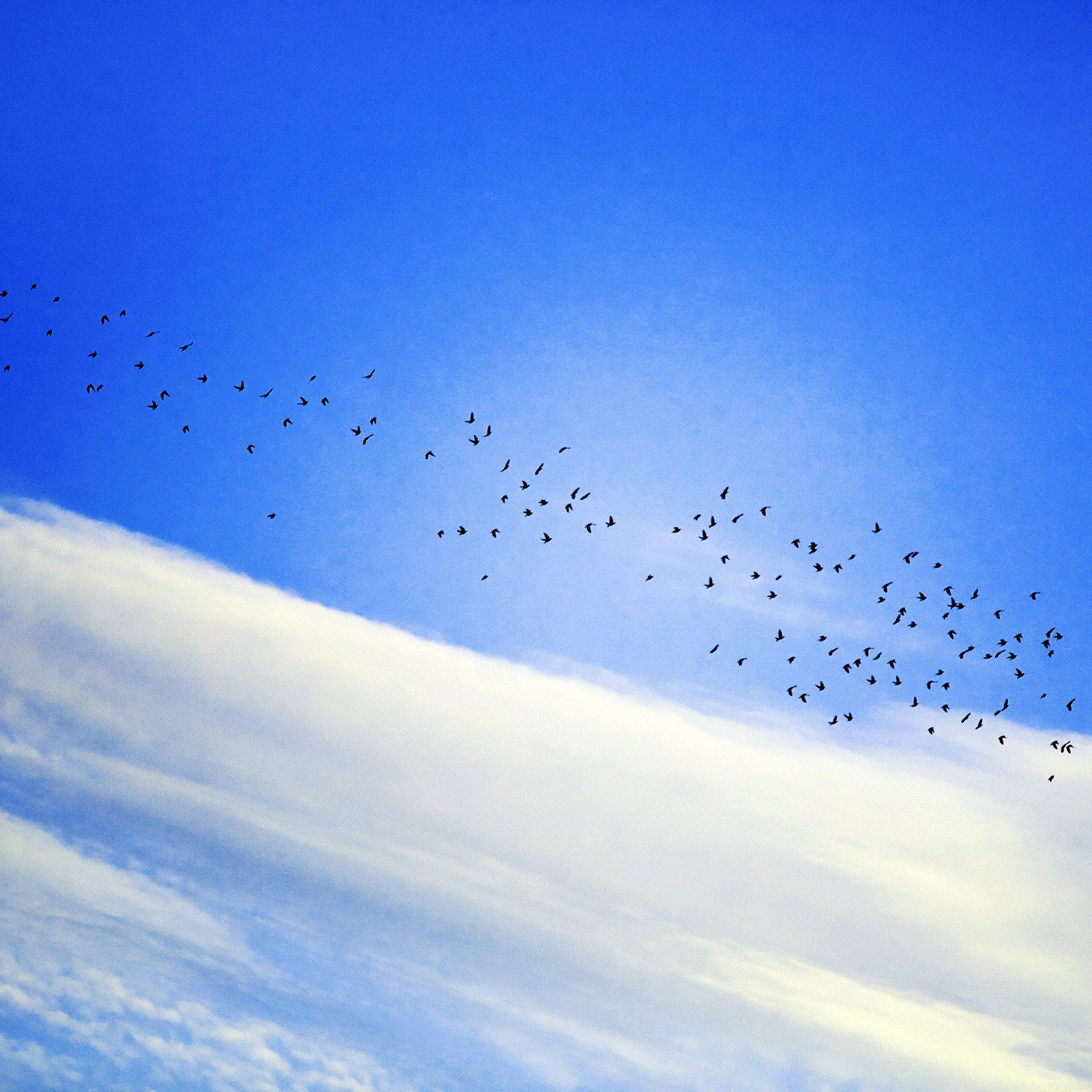 Sky Cloud Birds Blue Fly Nature iPad Air wallpaper