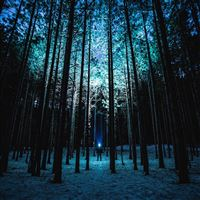 Wood Mountain Nature Blue Night iPad Air wallpaper