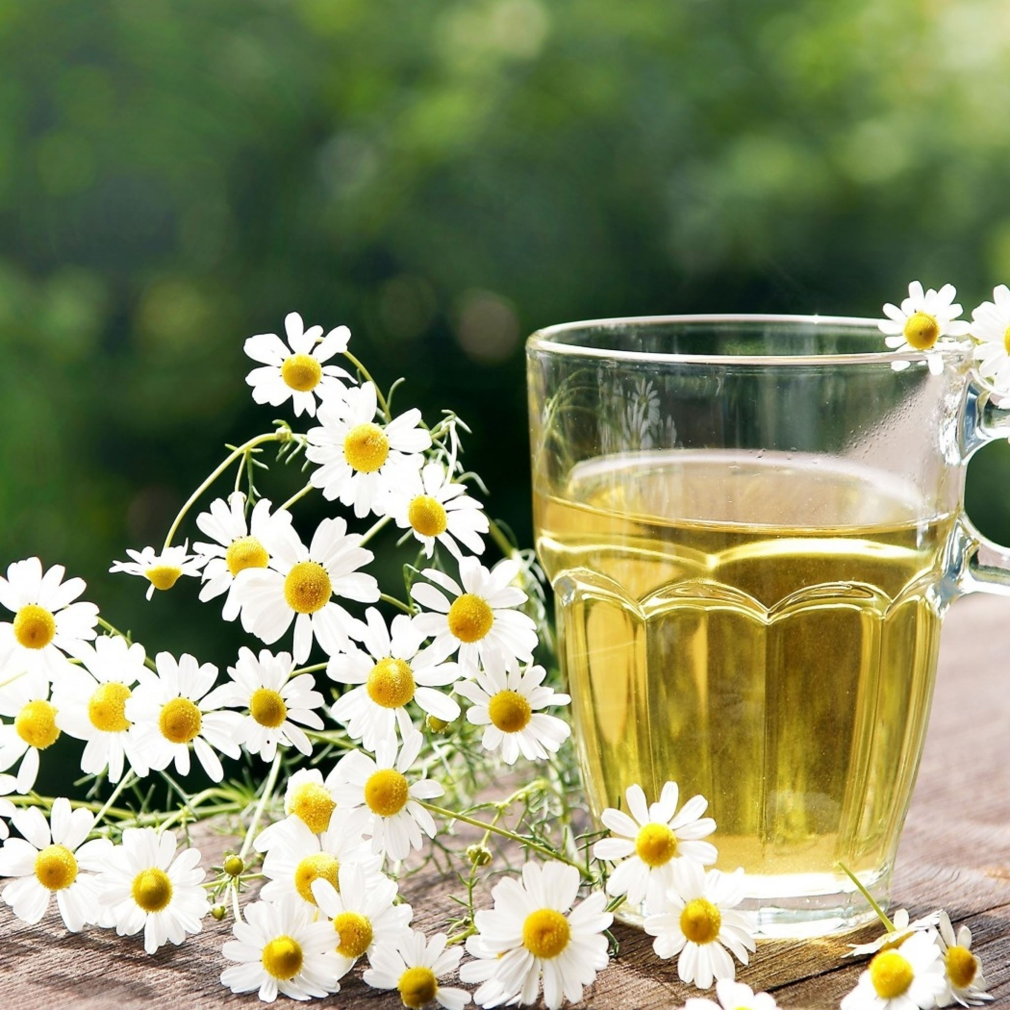 Tea Herbal Chamomile Cup Glass Nature iPad Air wallpaper