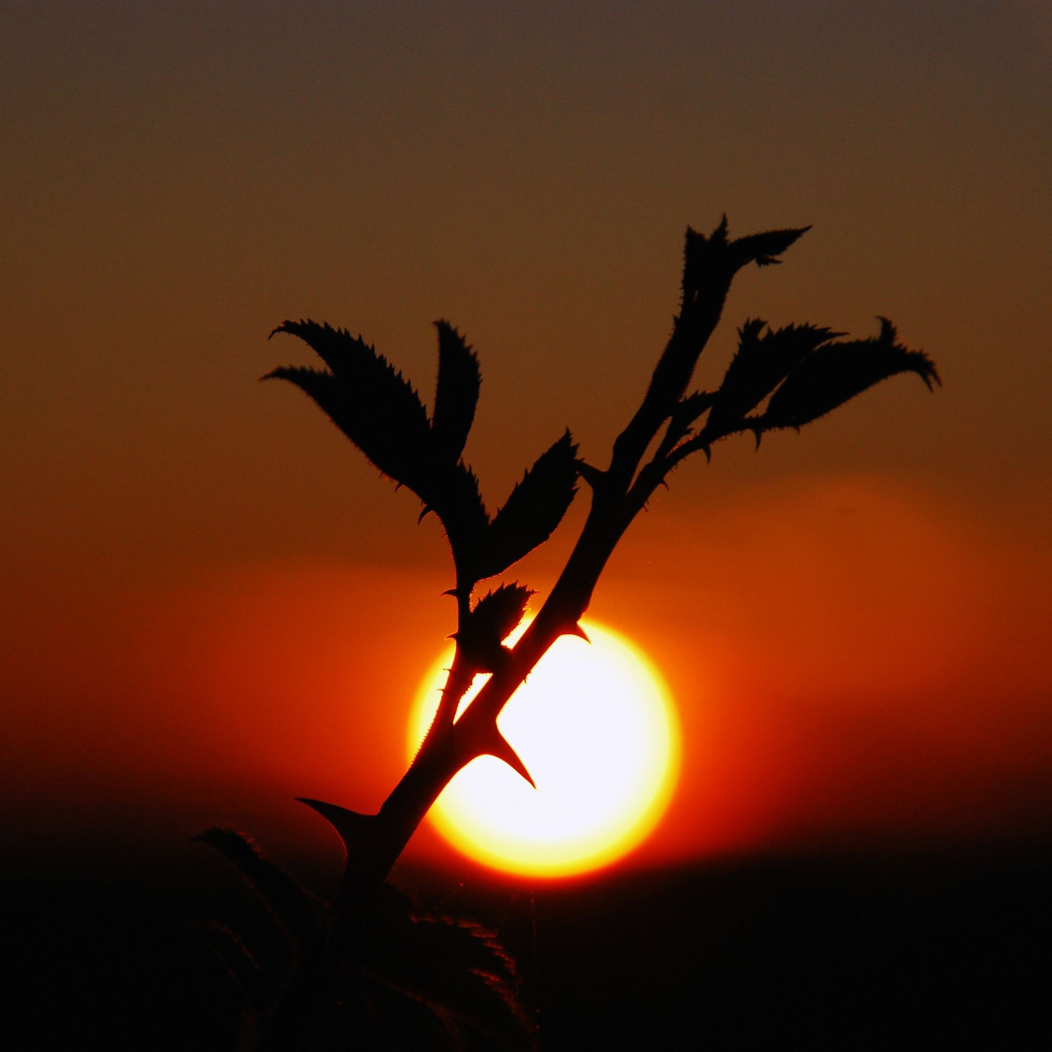 Plants Sunset Nature Sky iPad Air wallpaper