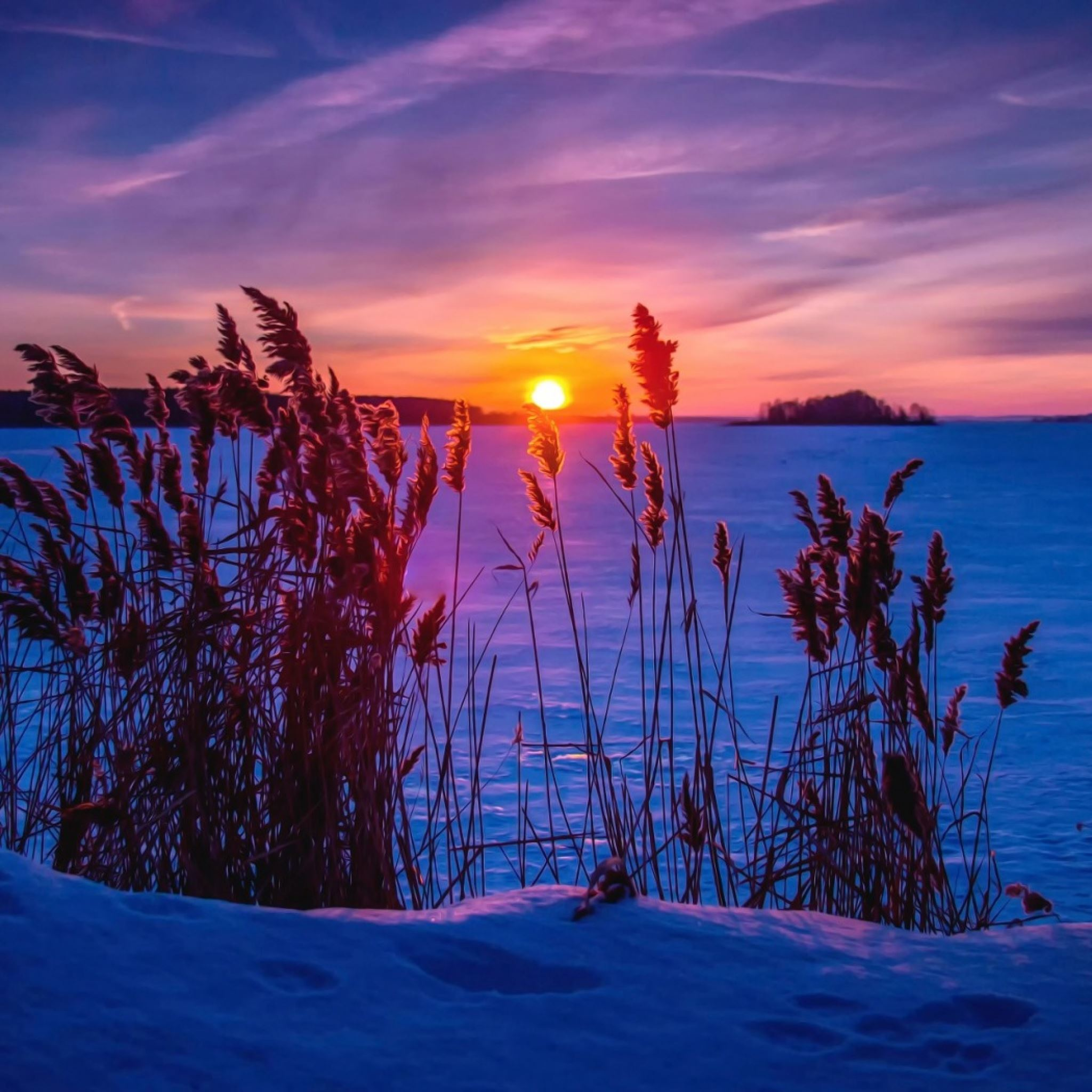 Winter sunset snow grass iPad Air wallpaper