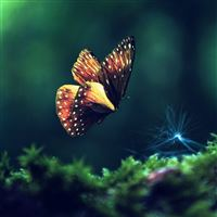 Butterfly grass flying wings iPad Air wallpaper