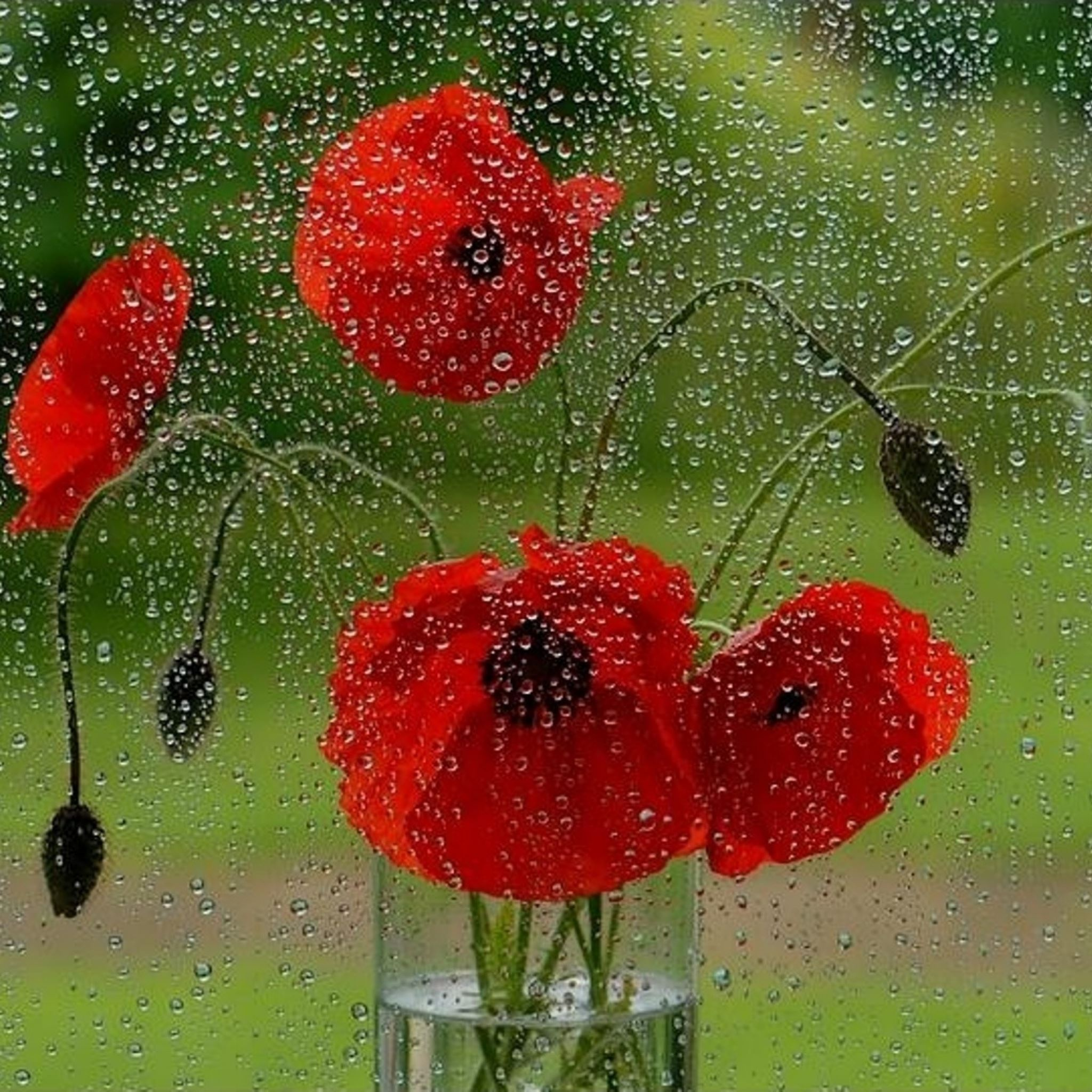 Glass rain drops fresh flower iPad Air wallpaper