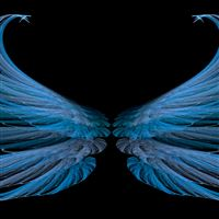 Blue black wings iPad wallpaper
