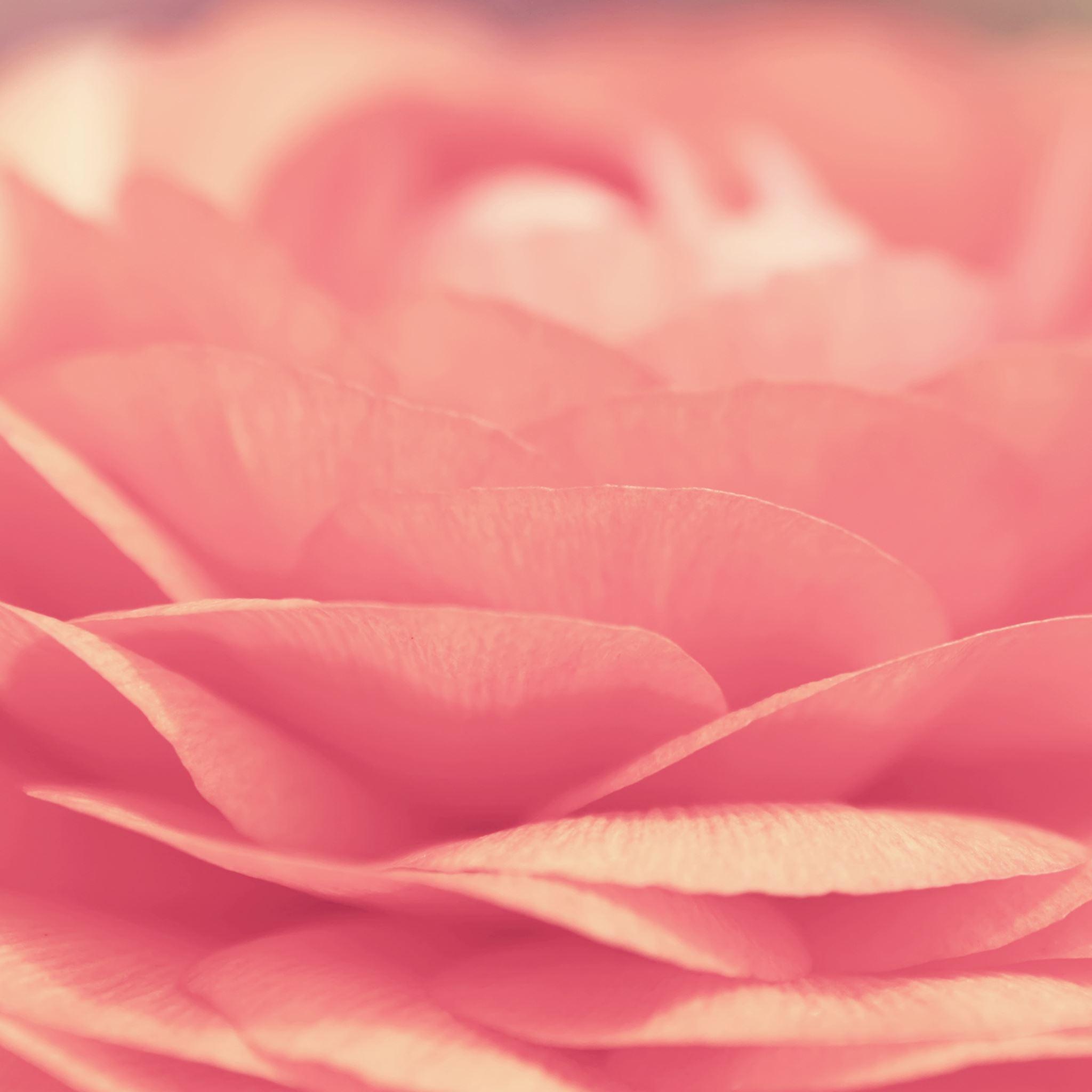 pink flower closeup ipad air wallpaper download | iphone wallpapers
