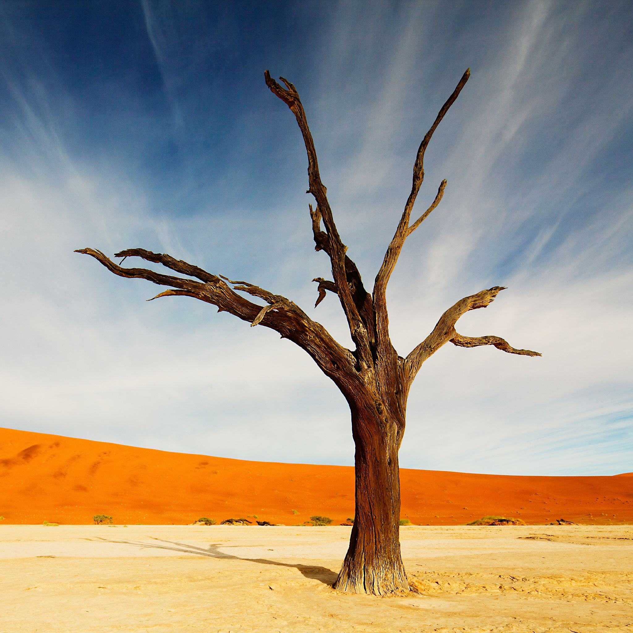 Withered Tree iPad Air Wallpapers Free Download