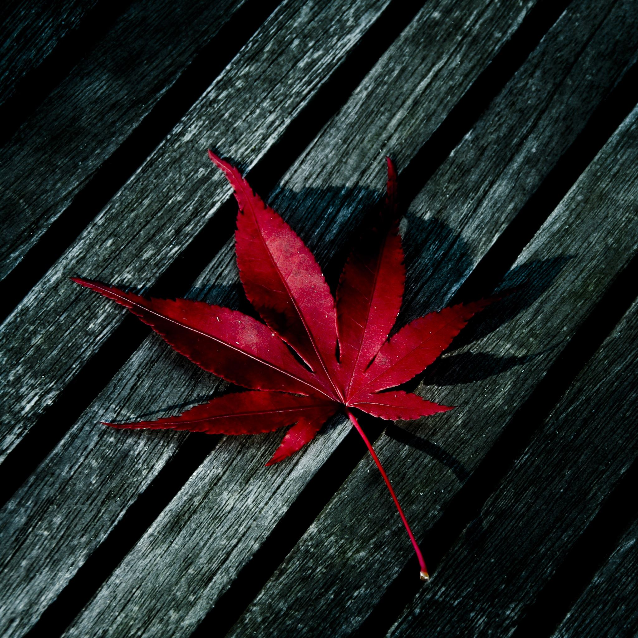 Red Leaf iPad Air wallpaper