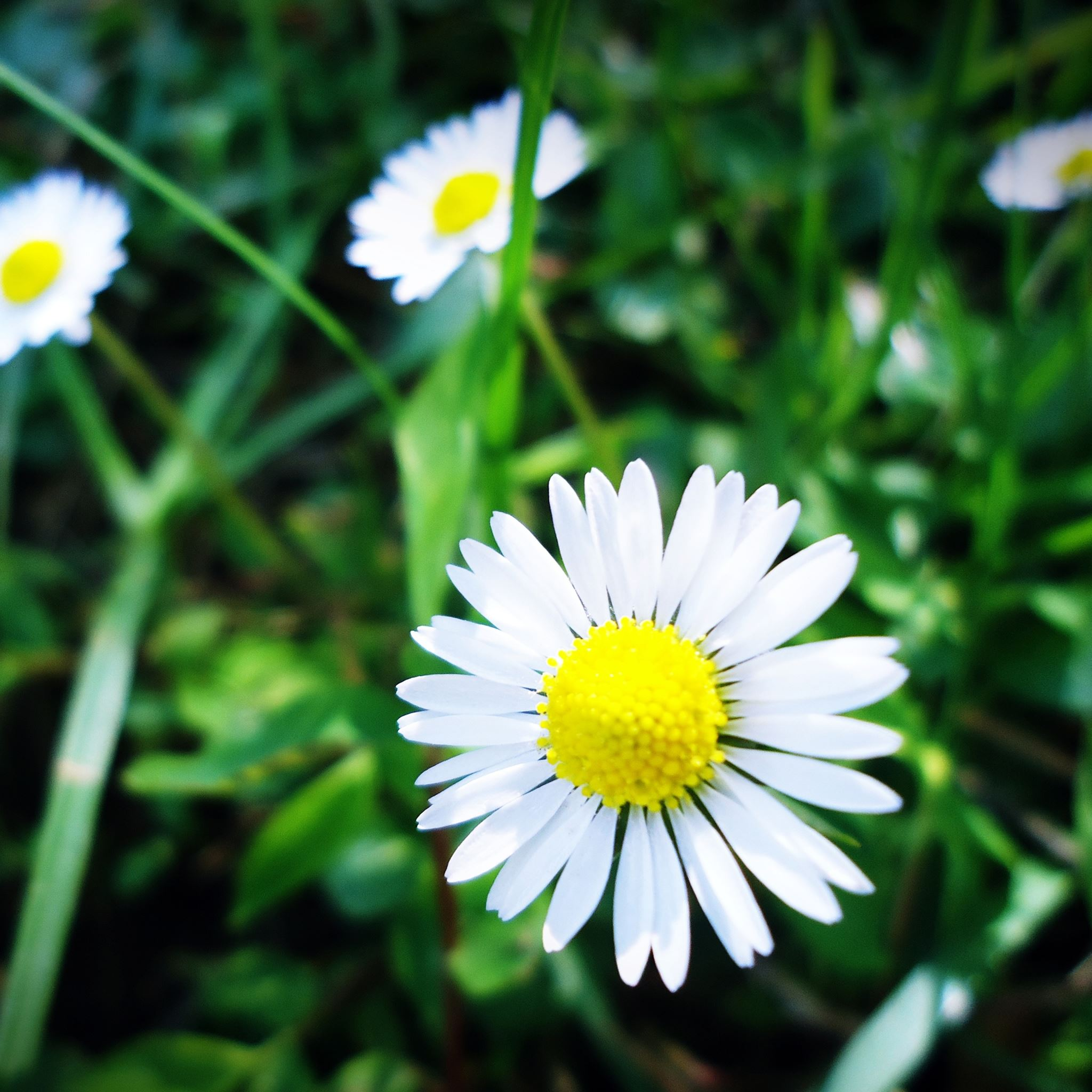 Spring White Flowers Ipad Air Wallpaper Download Iphone Wallpapers