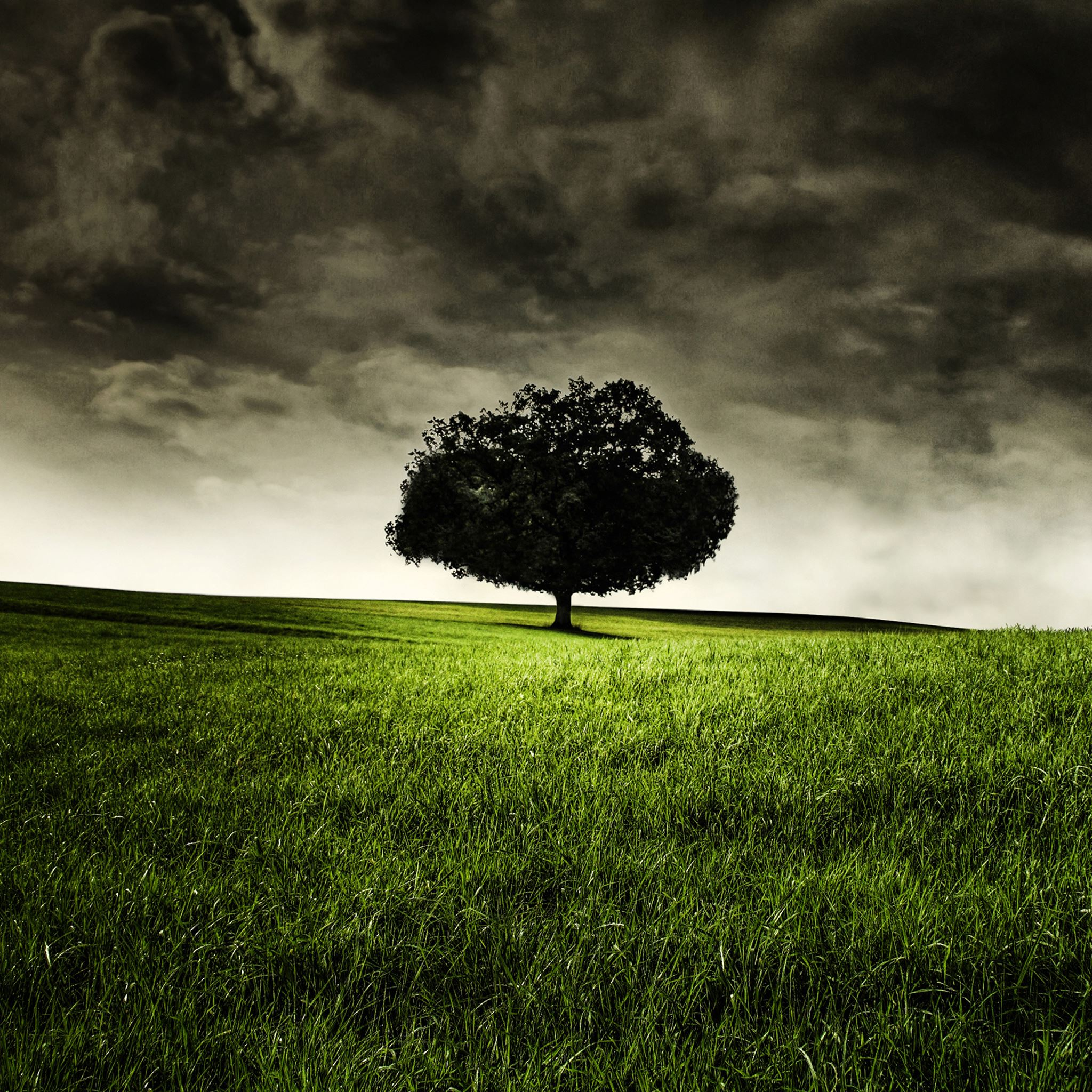 Single Tree on Hill iPad Air wallpaper