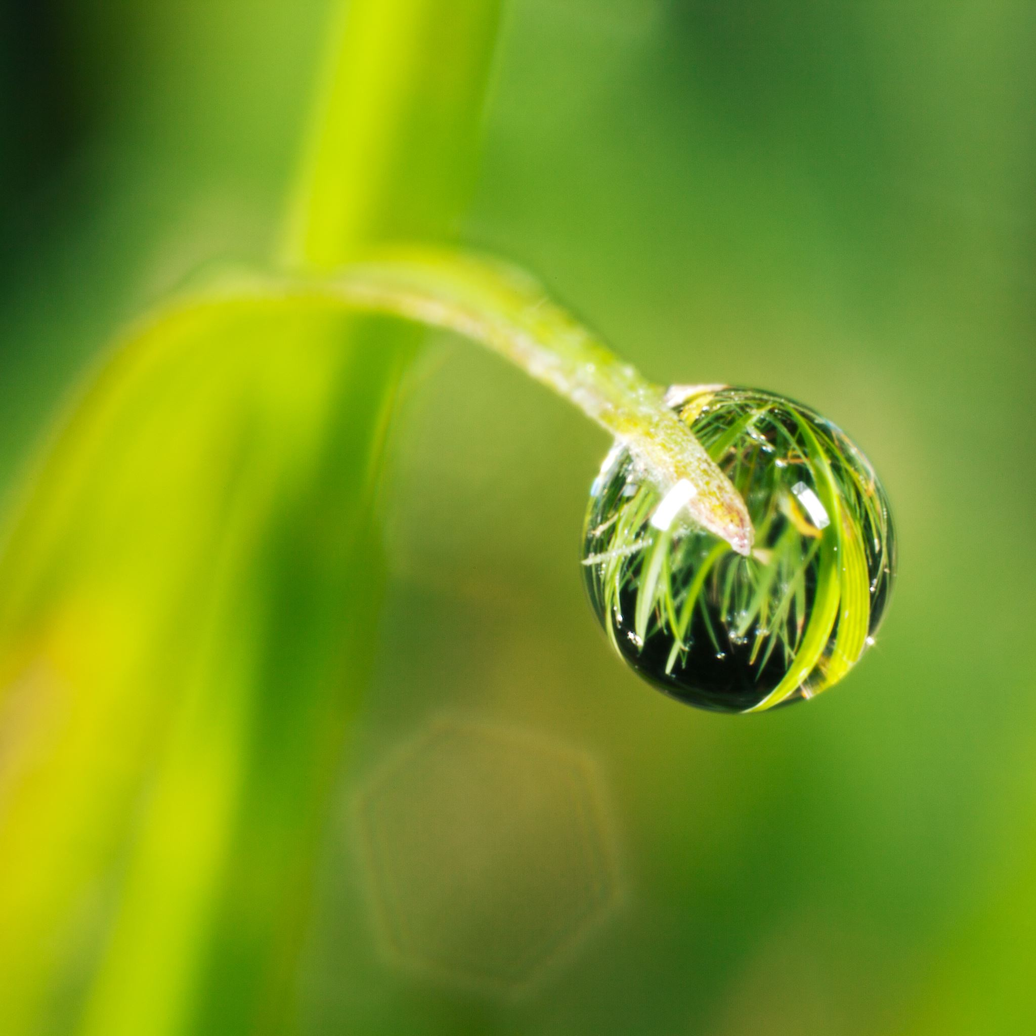 Grass Drop iPad Air wallpaper