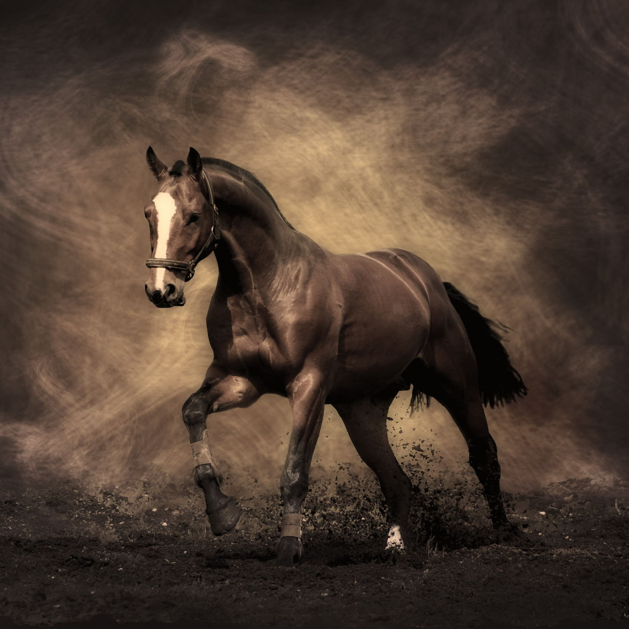 Running Horse Ipad Air Wallpapers Free Download