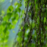 Wet Twigs Summer iPad Air wallpaper