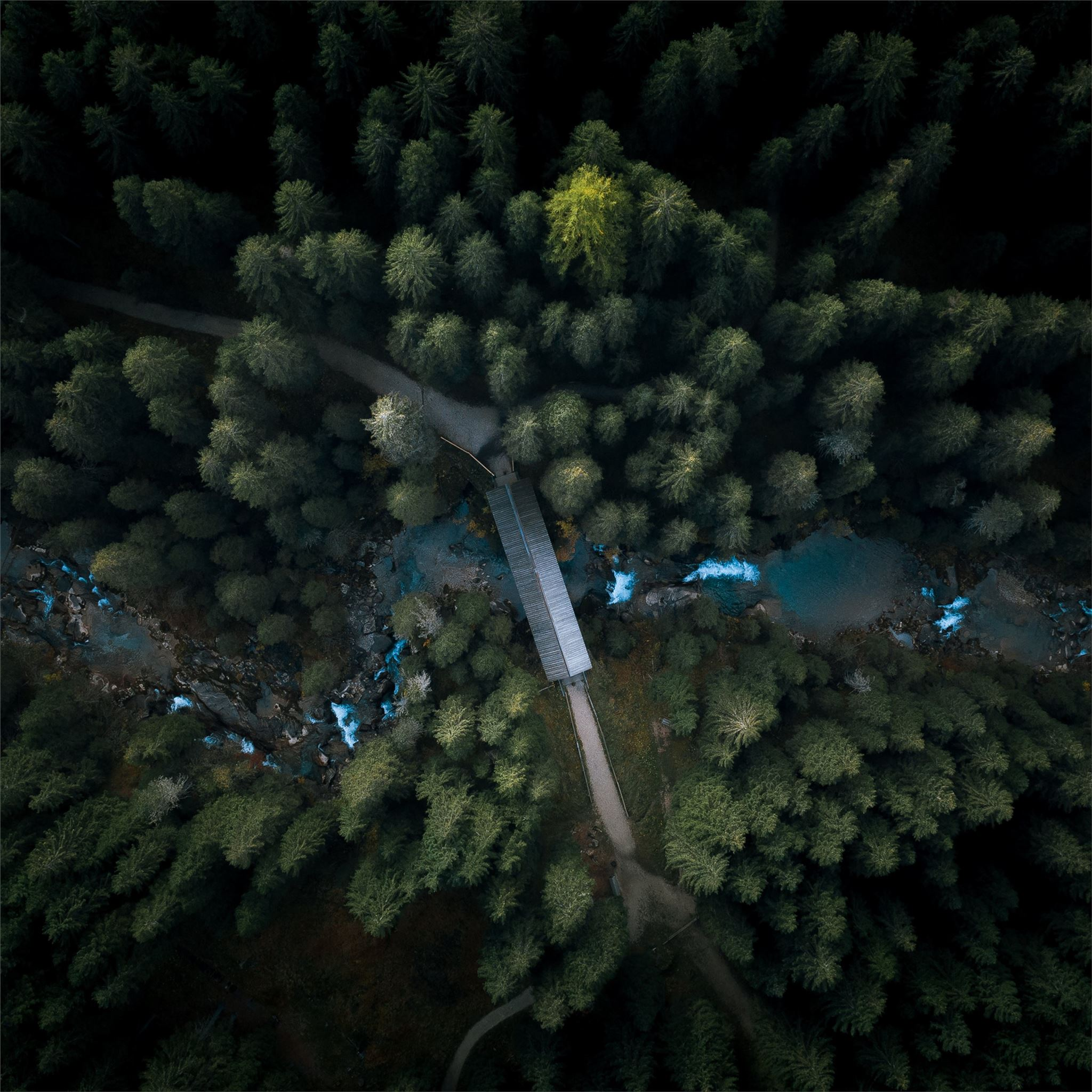 Aerial View Forest 4k Ipad Pro Wallpapers Free Download