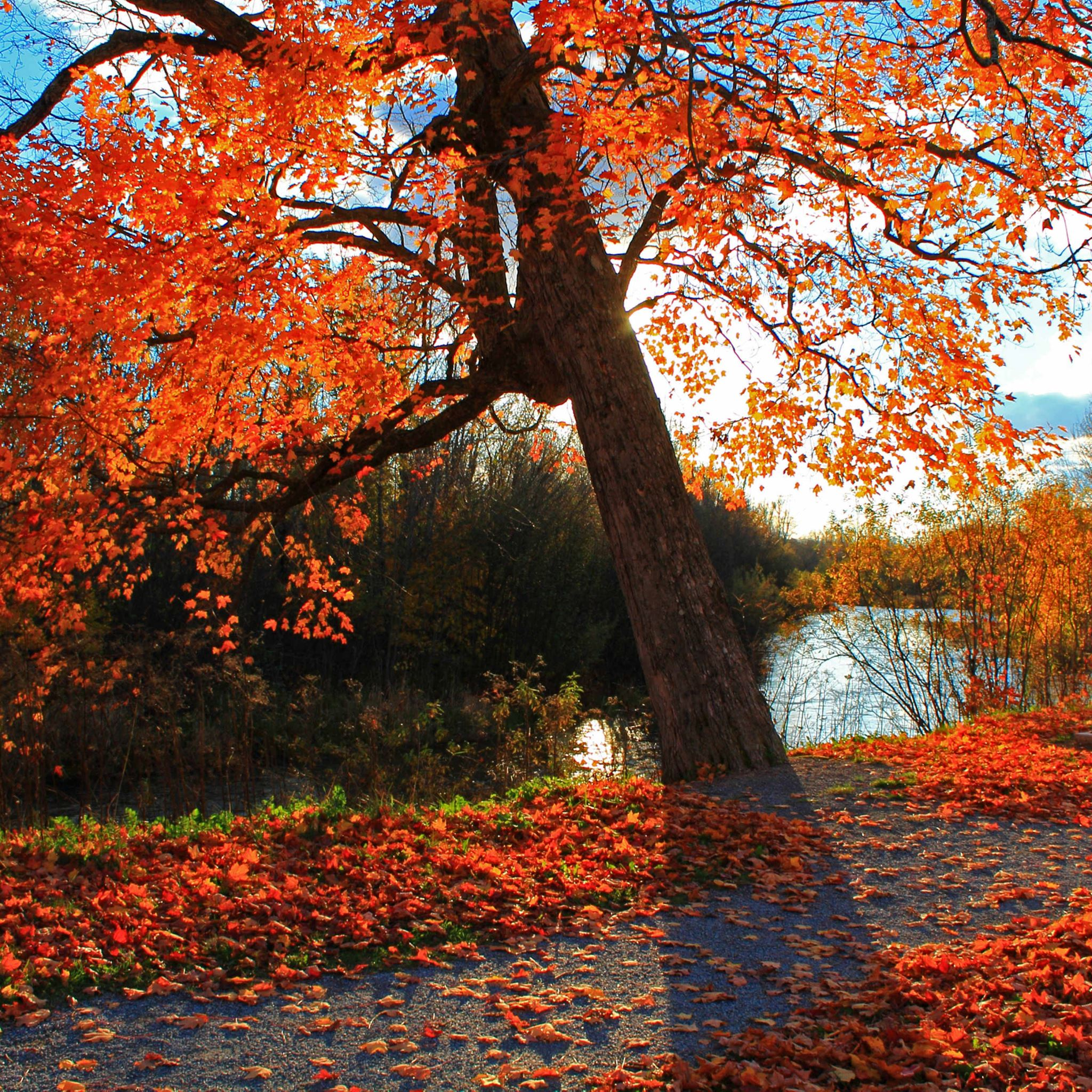Autumn Park River Shop Landscape iPad Pro wallpaper