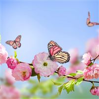 Flowers butterflies spring bloom branch iPad Pro wallpaper