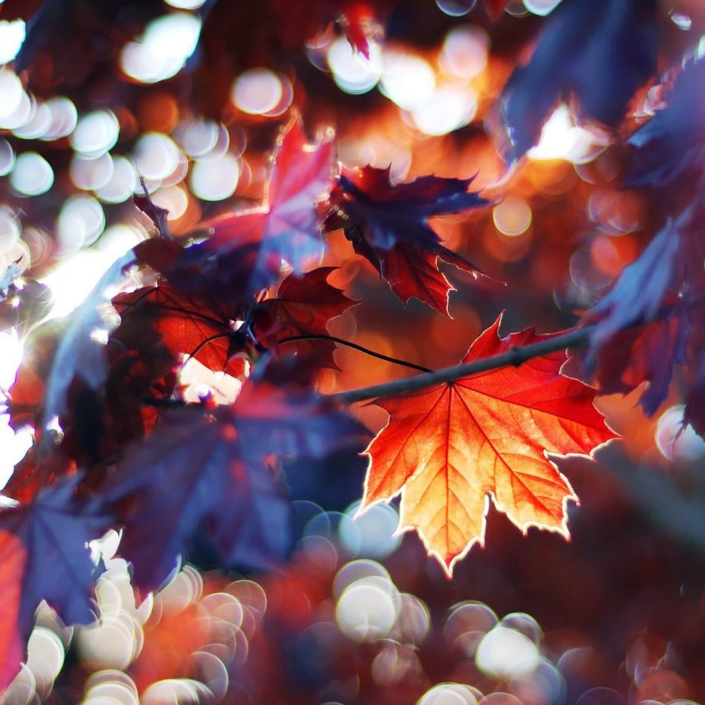 Autumn Leaves Ipad Wallpapers Free Download