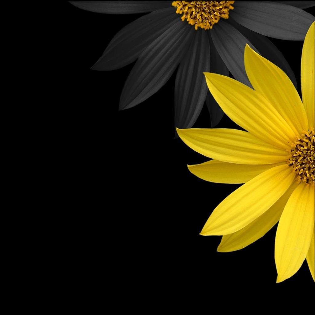 Simple Flower IPad Wallpaper Download