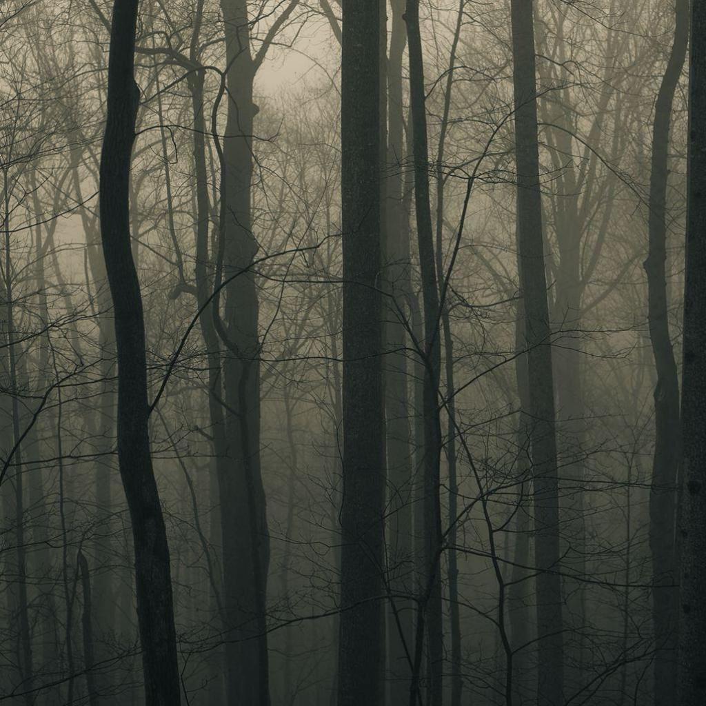 Best Forest Ipad Wallpapers Hd Ilikewallpaper