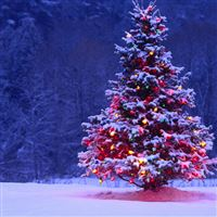 Decorated Christmas Tree iPad wallpaper