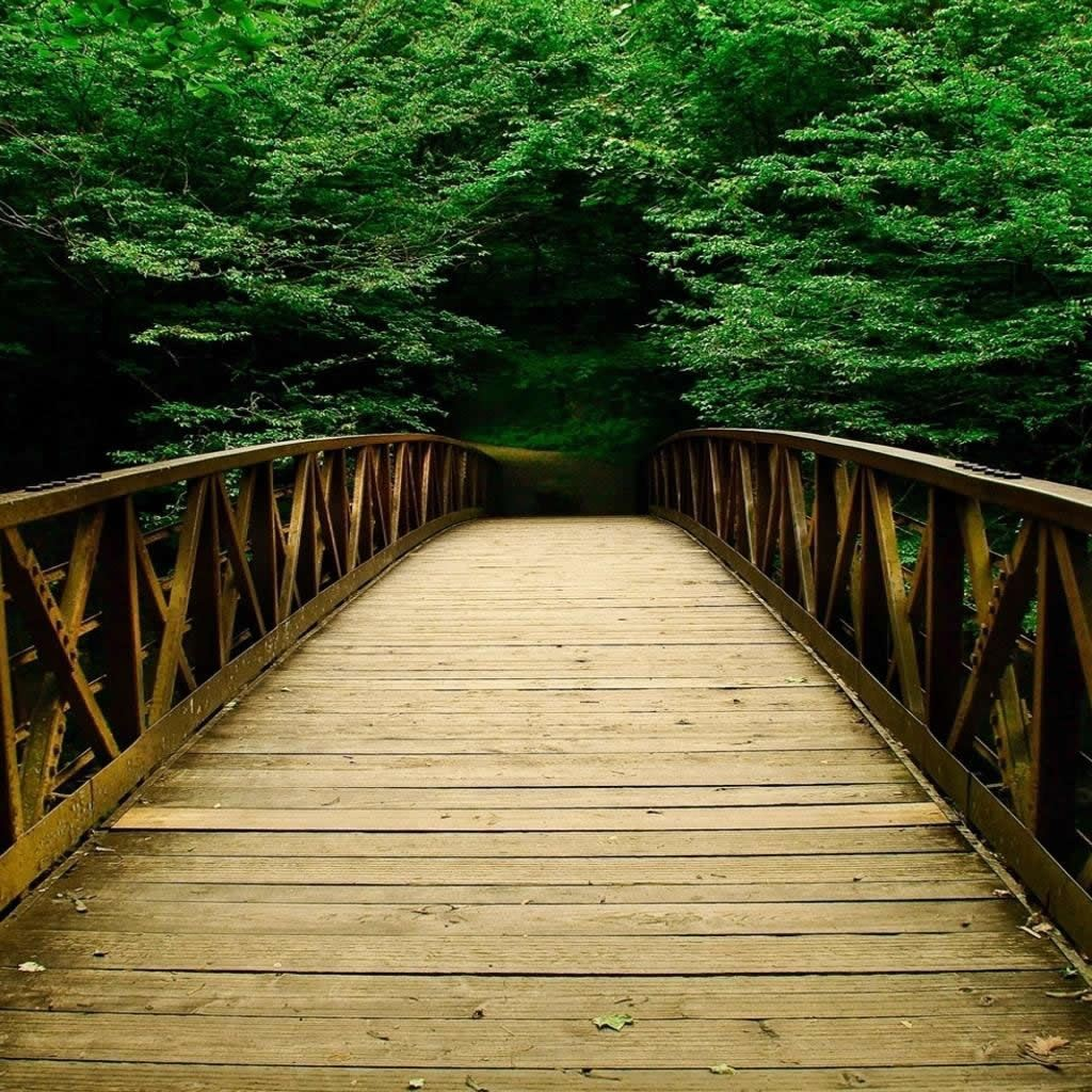 Nature Forest Bridges Ipad Wallpapers Free Download
