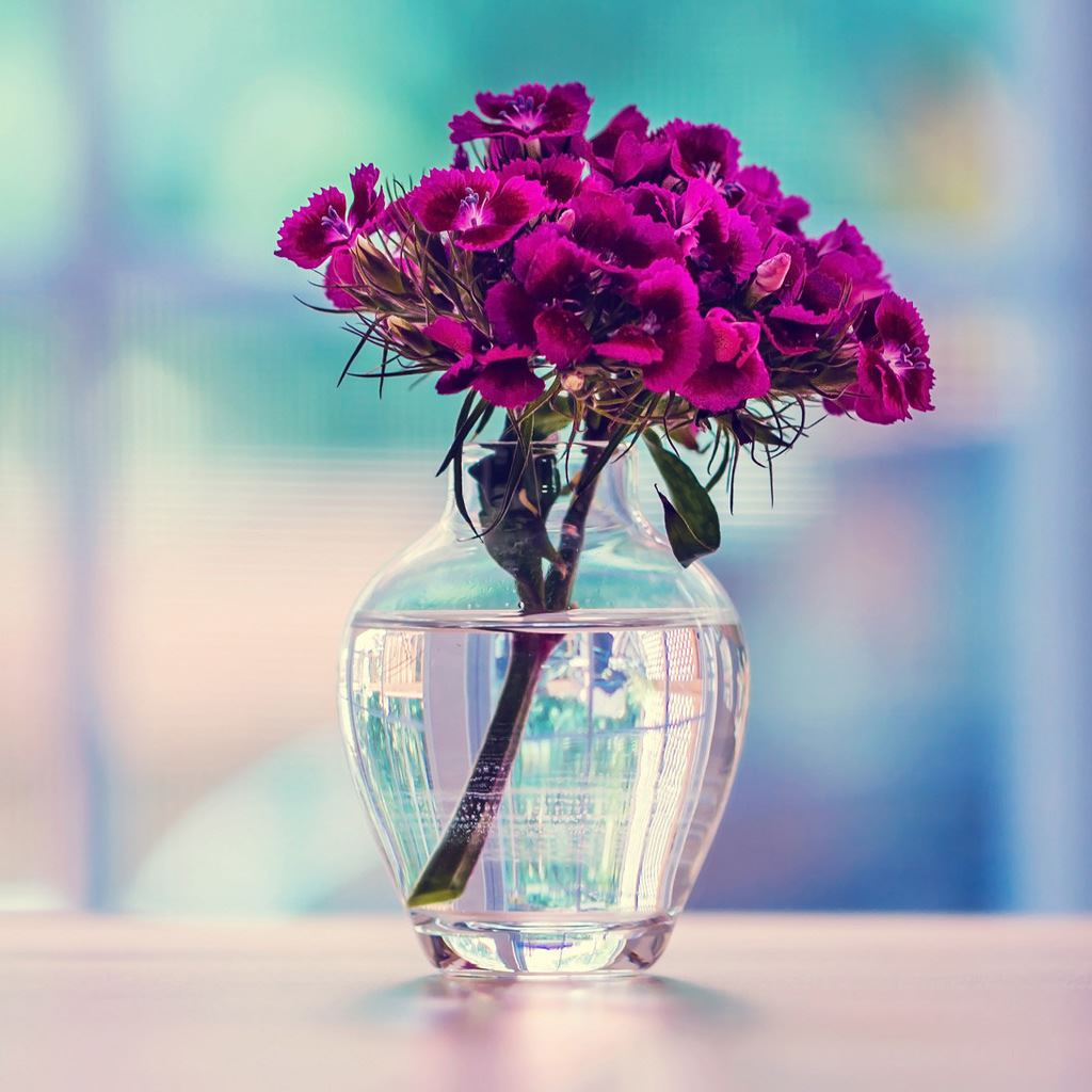 Purple Carnation In A Vase Flower IPad Wallpaper Download