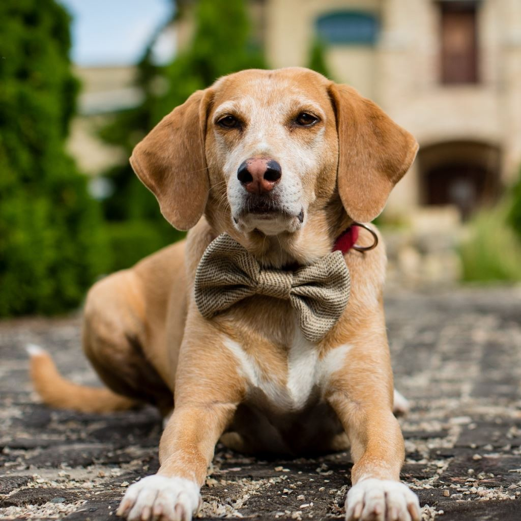Handsome Dog IPad Wallpapers Free Download