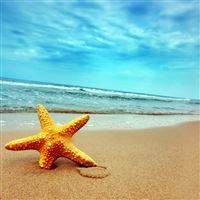 Sea star iPad wallpaper