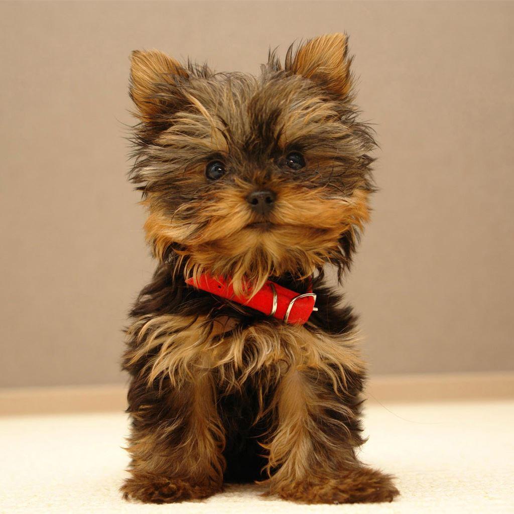 Best Pets Animals Ipad Wallpapers Free Hd