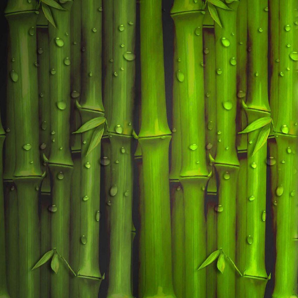картинки бамбук для телефона парк, реликтовые леса