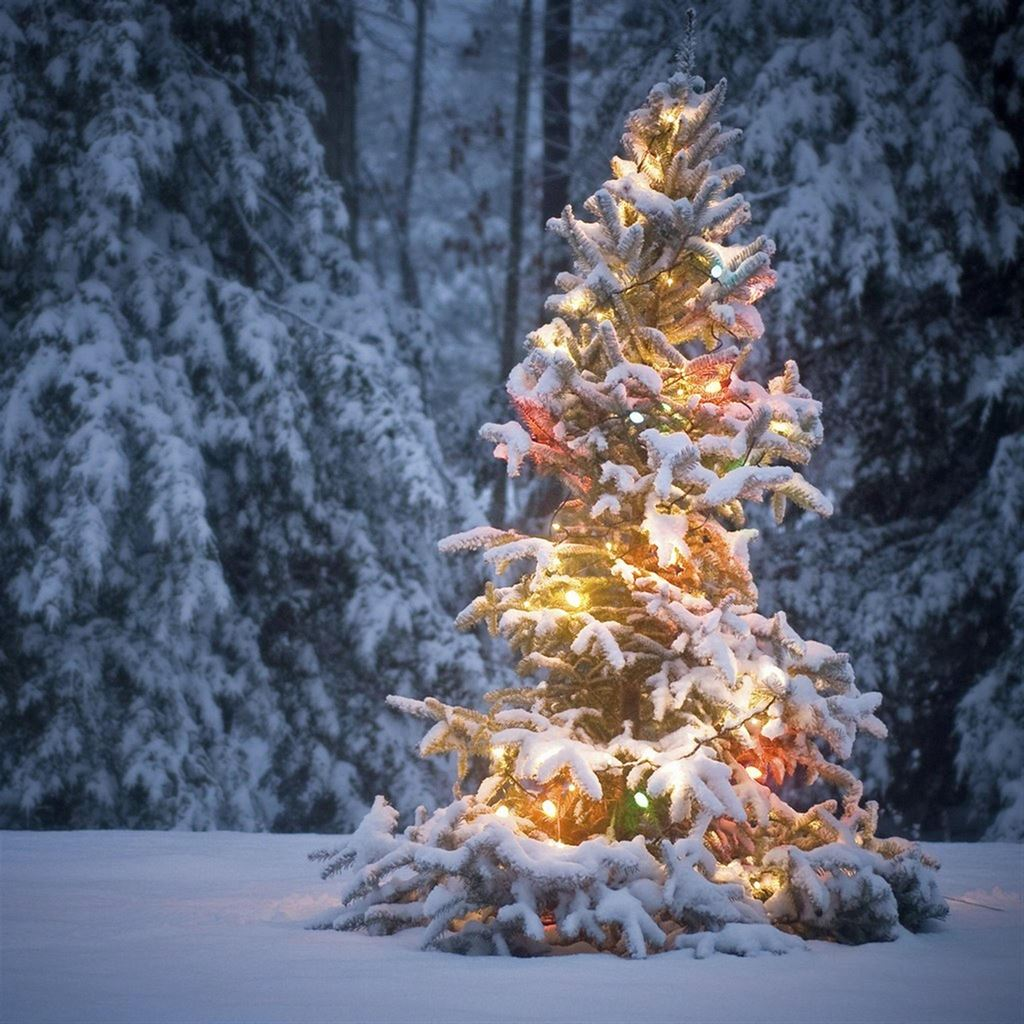 Neon Light On Snowy Christmas Tree Ipad Wallpapers Free Download