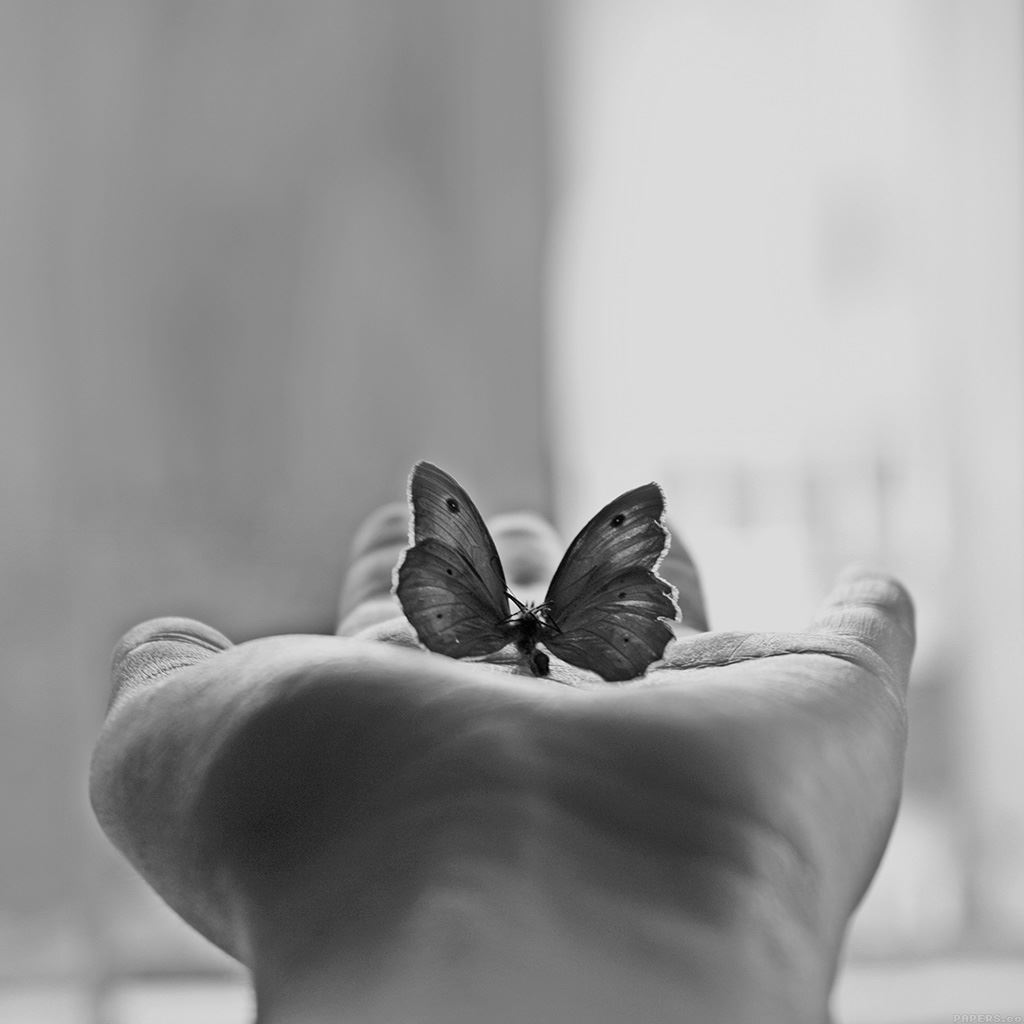 Butterfly Love In Hand Animal Ipad Wallpapers Free Download