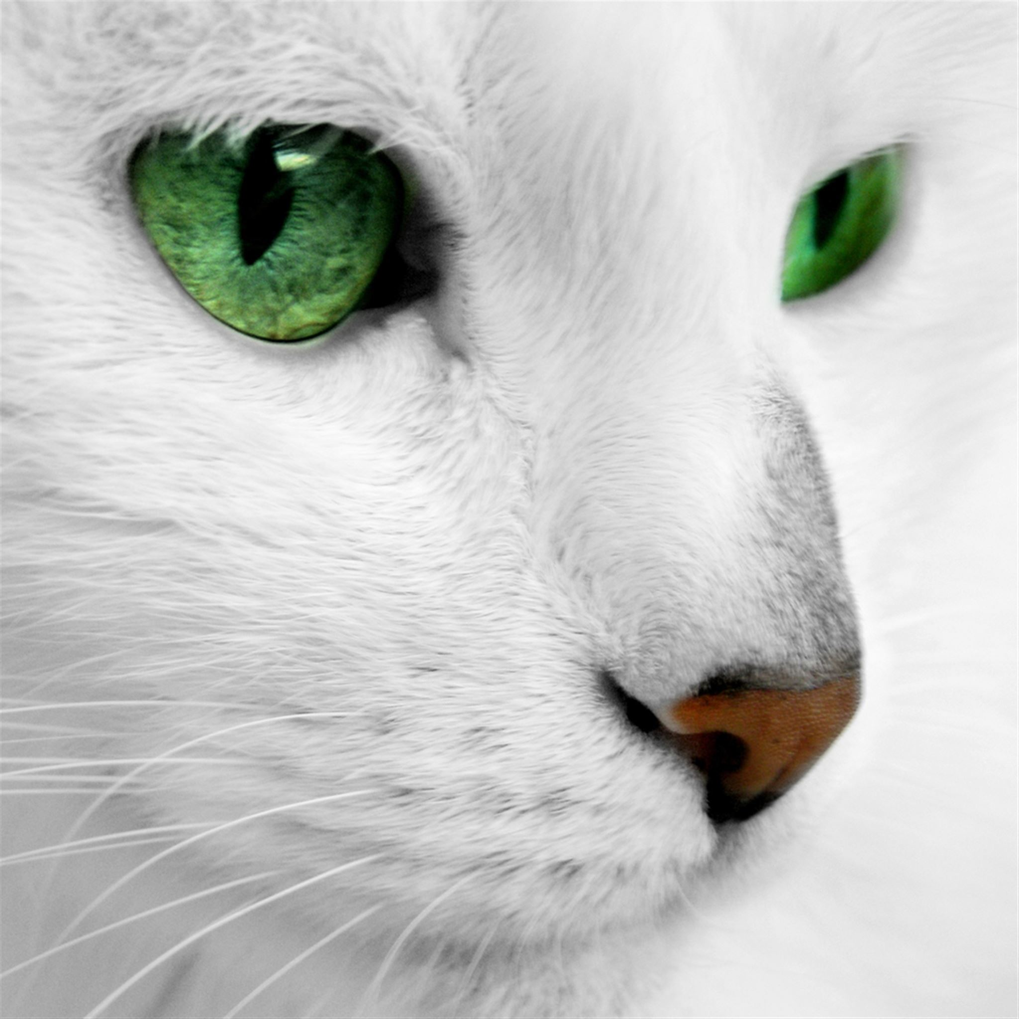 Emerald Cat Eyes Ipad Wallpapers Free Download