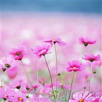 Happy Galsang Flower Field Blur iPad wallpaper