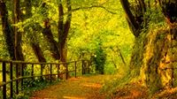 Leafy Autumn Pathway iPad wallpaper