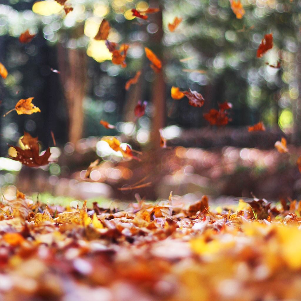 foto de Best autumn iPad Wallpapers HD - iLikeWallpaper