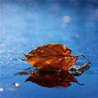 Leaf fallen dry water iPad wallpaper