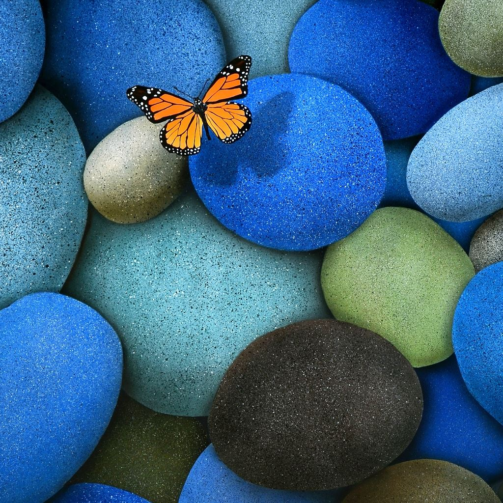 lonely butterfly ipad wallpaper download | iphone wallpapers, ipad