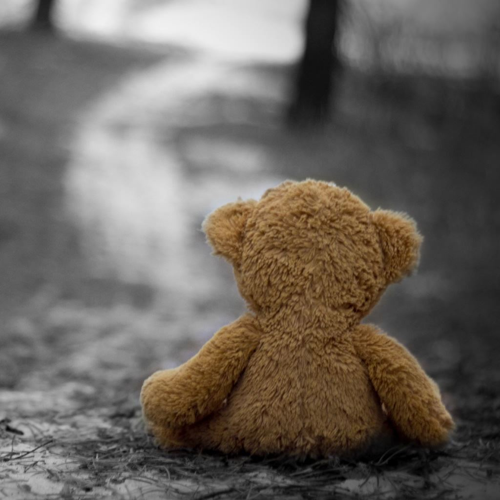 Teddy Bear In The Wood Ipad Wallpapers Free Download