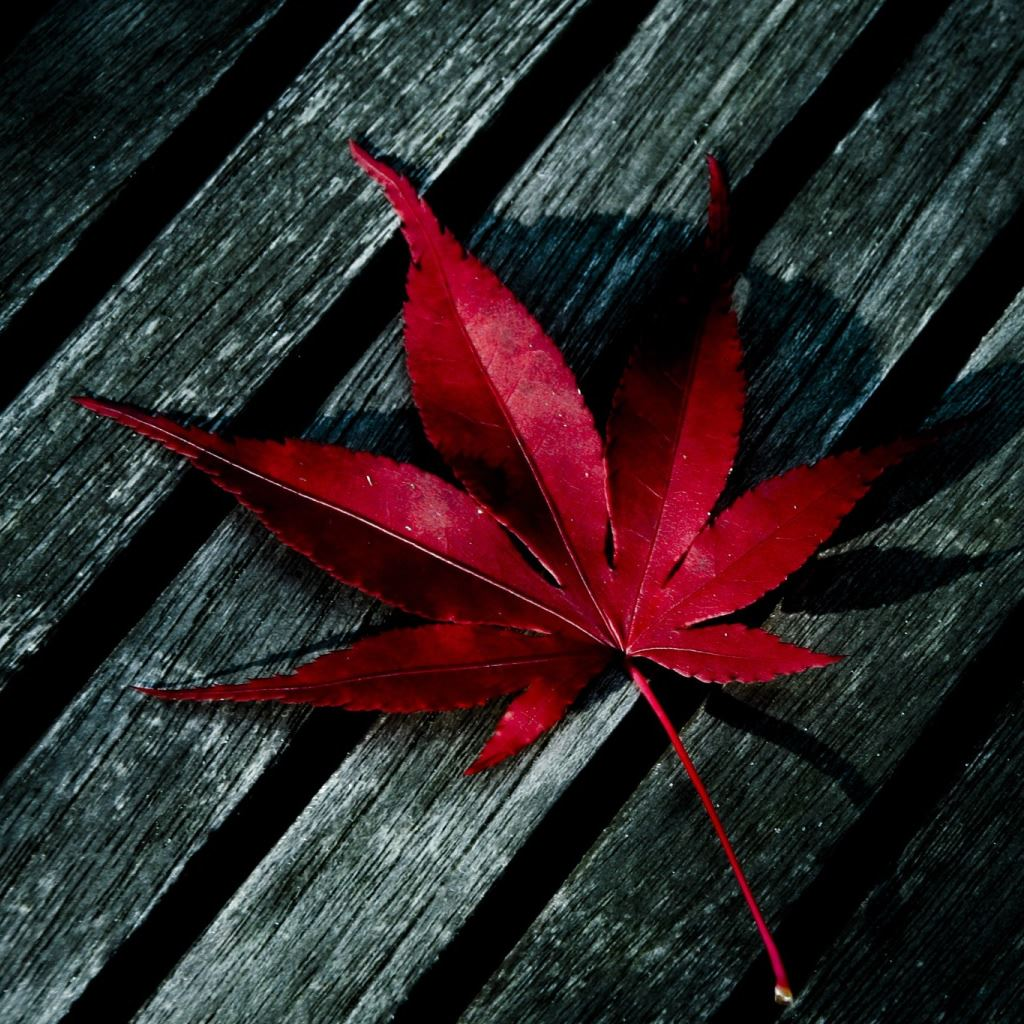 red leaf ipad wallpaper download | iphone wallpapers, ipad