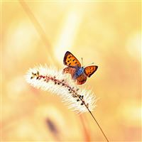 Butterfly wallpapers for ipad