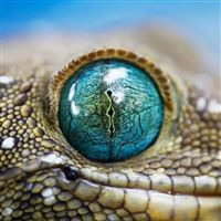 Blue Reptile Eye iPad wallpaper