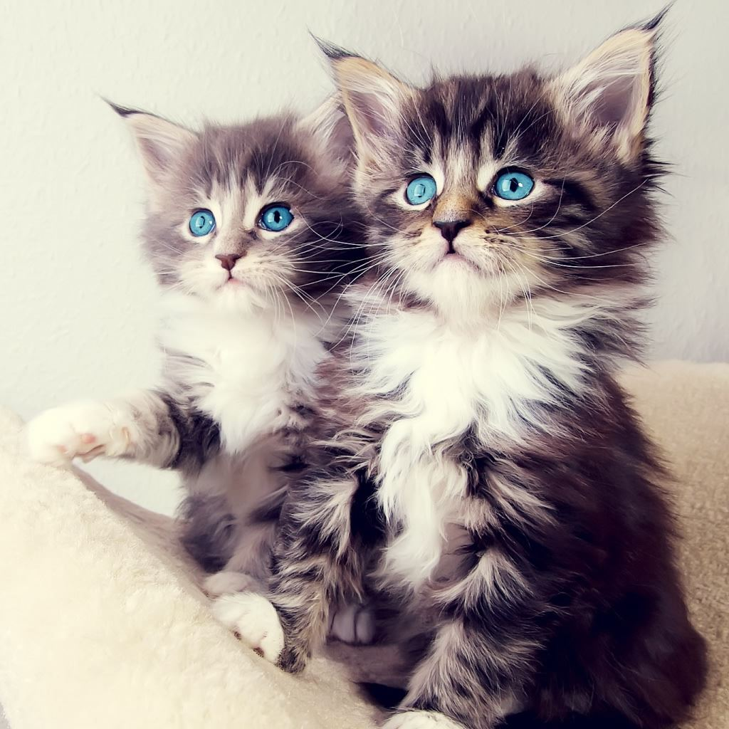 Cute Kittens iPad Wallpapers Free Download