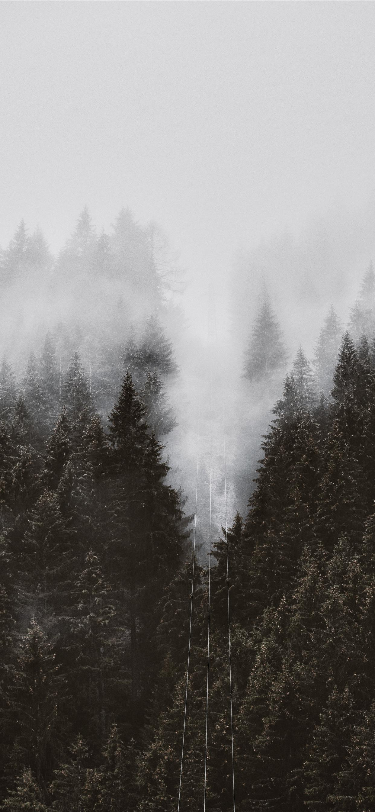 trees iPhone 11 Wallpapers Free Download