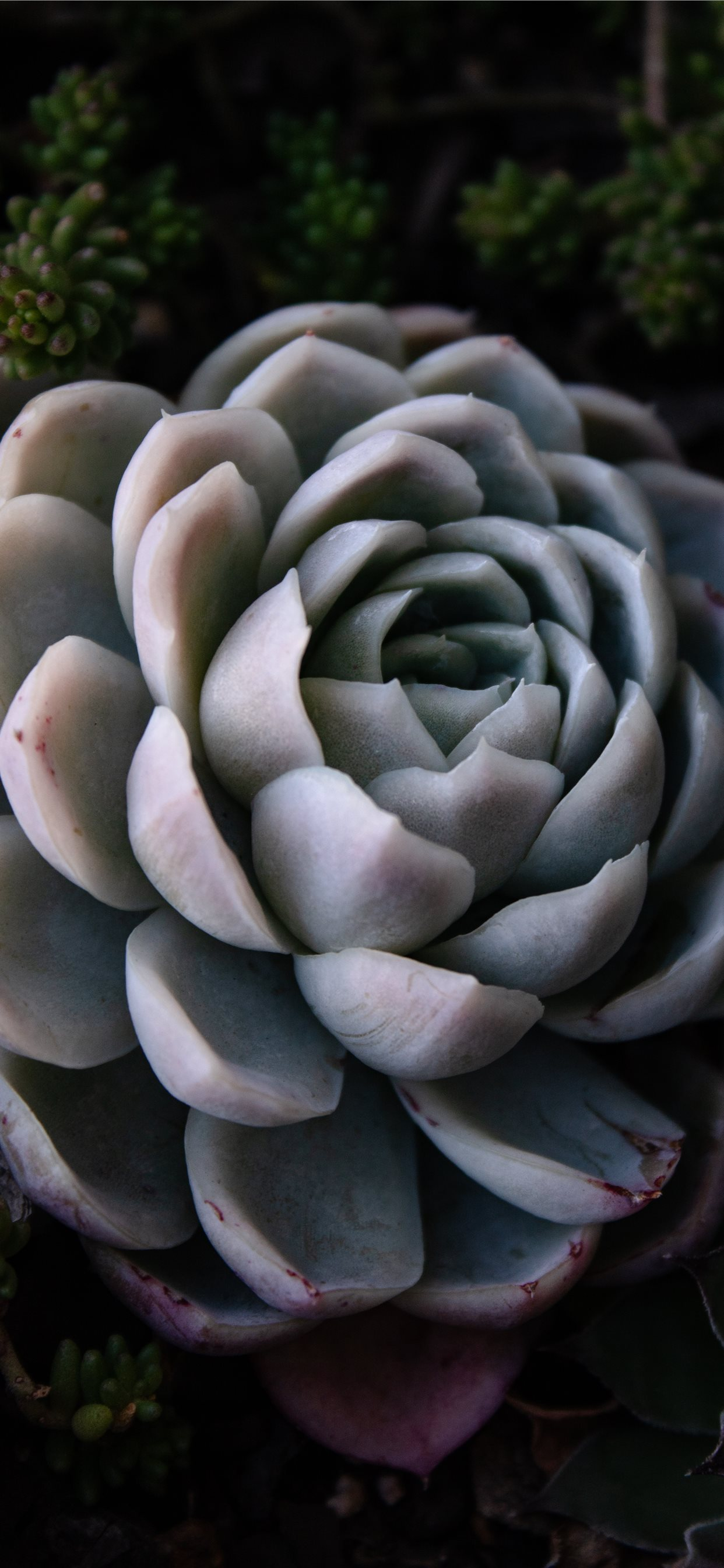 Green Succulent Iphone 11 Wallpapers Free Download