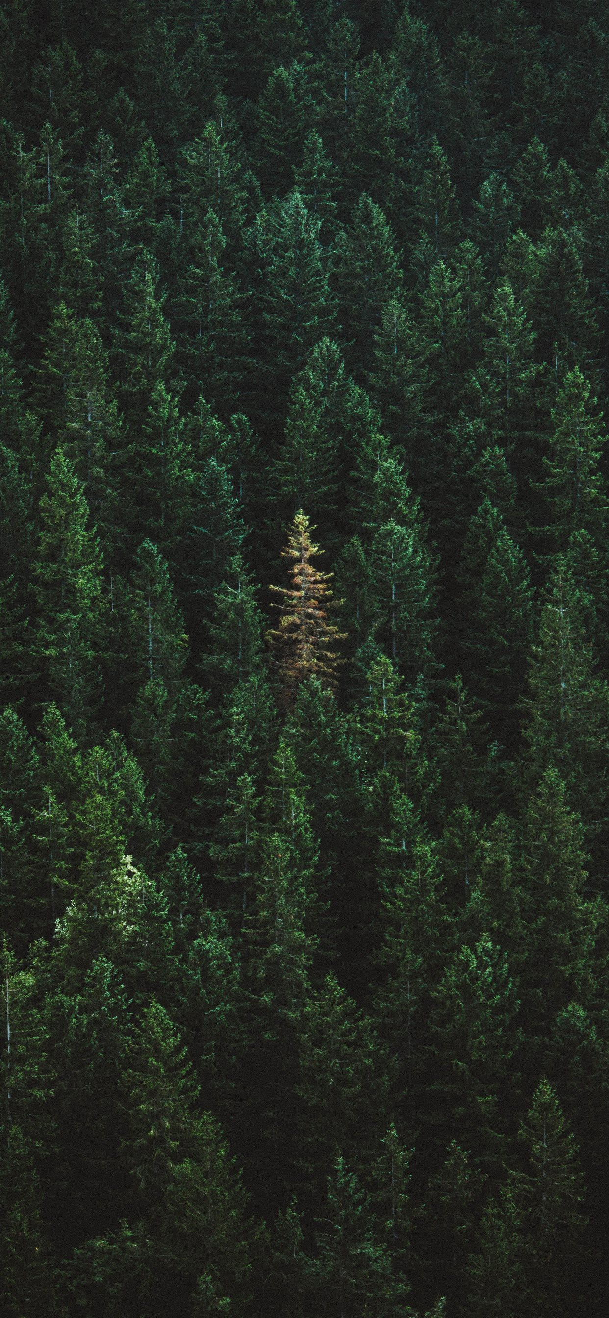 Green Treers Iphone 11 Wallpapers Free Download